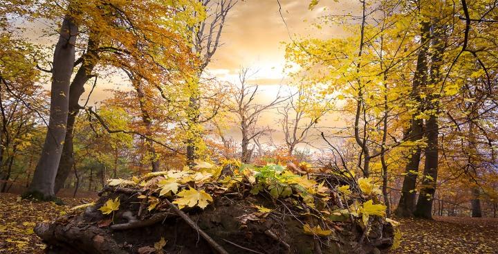 Padurea Parcului Poiana