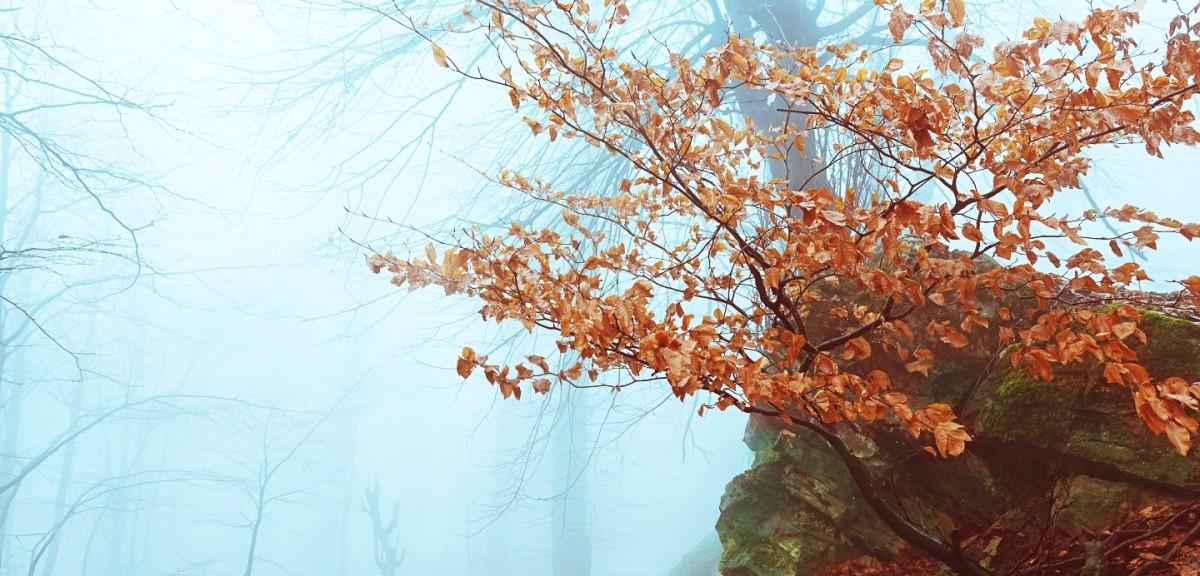 Padurea Parcului Poiana 2